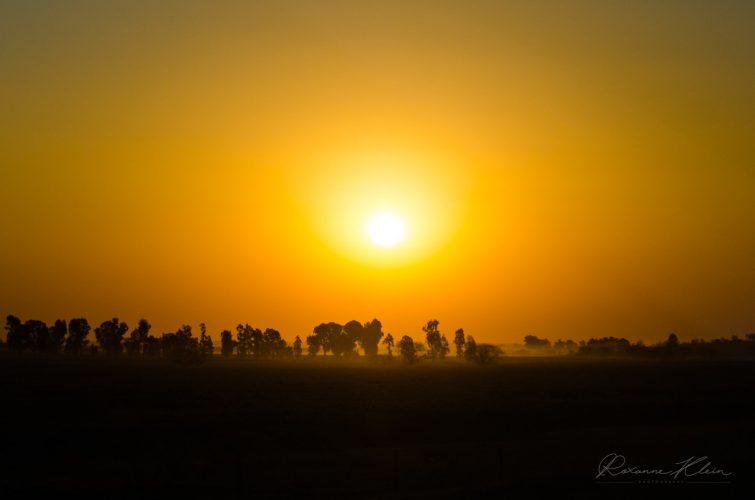 Sunset Treeline