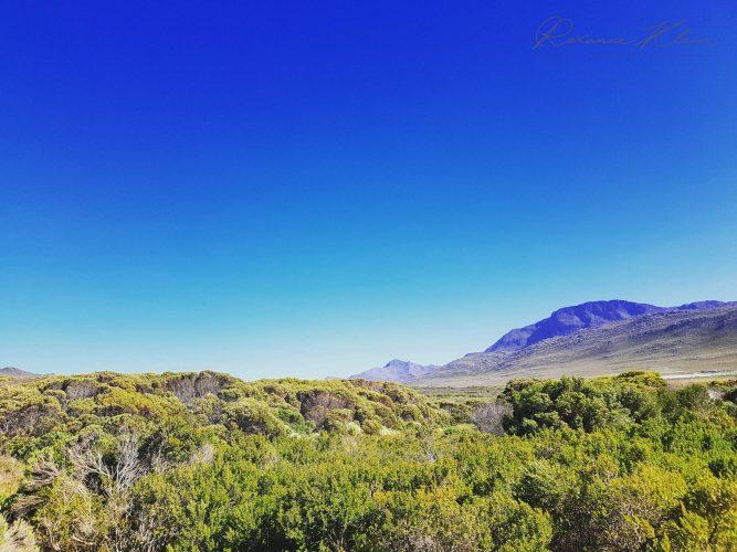 South Africa - Vynbos